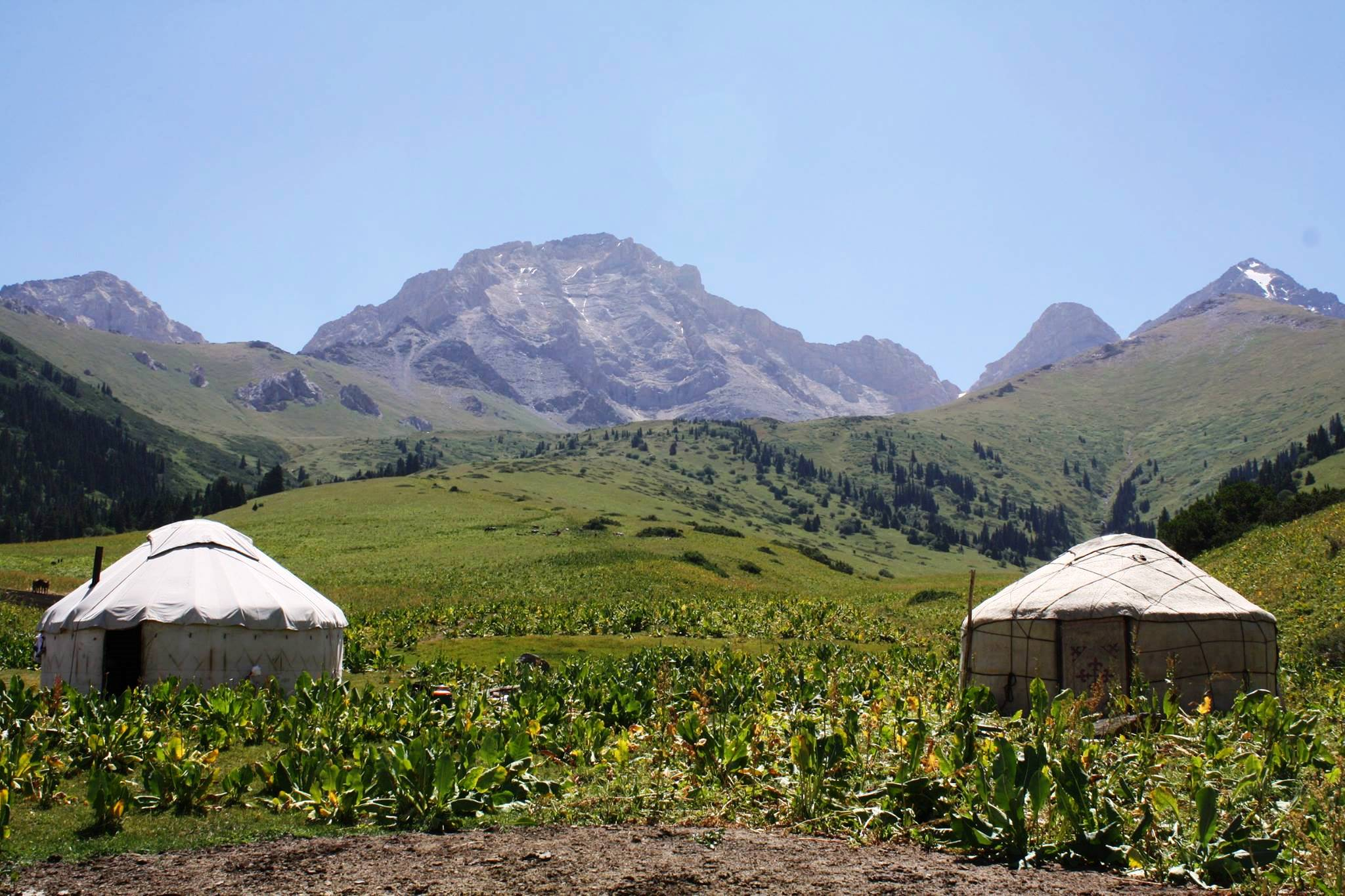 Kochmon Yurt Camp